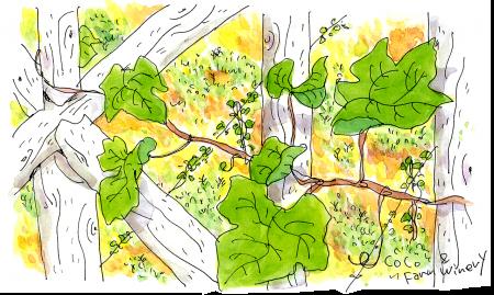 ベランダフェンスの葡萄の葉