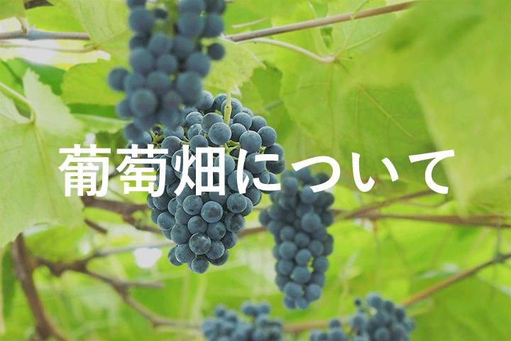 葡萄畑について